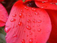 A Big Wet Flower