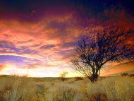 Almond Tree, Antelope Valley, California