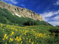 Alpine Meadow Near Crested Butte, Colorado