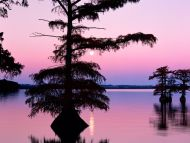 Bald Cyprus Trees, Reelfoot Lake, Tennessee