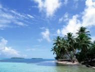 Beach, Coconut Tree