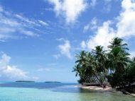 Beach, Coconut Tree