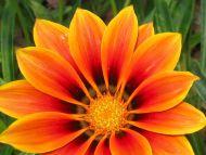 a beautiful flower 4 a