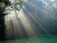 Beautiful Rays in Forest