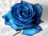 Desktop wallpapers flowers backgrounds best rose aqua blue www best rose aqua blue izmirmasajfo