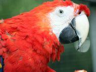 Big Parrot Closeup
