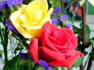 Big Yellow and Red Roses