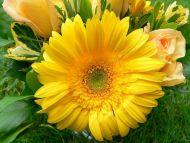Desktop Wallpapers » Flowers Backgrounds » Big Yellow Flower » www.desktopdress.com