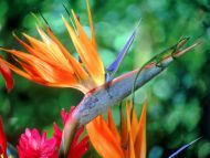 Bird of Paradise and Friend