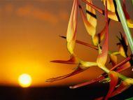 Bird of Paradise, Sunset
