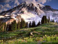 Blooming Wildflowers and Mount Rainier, Washington