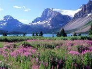 Bow Lake, Canadian Rockies, Alberta