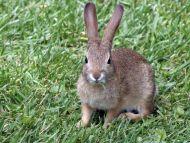 Desktop Wallpapers Animals Backgrounds Bunny Rabbit