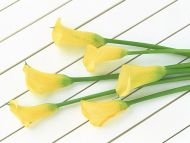 Callas Yellow