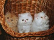 Cats in Bin