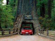 Desktop wallpapers other backgrounds chandelier tree leggett chandelier tree leggett california arubaitofo Images