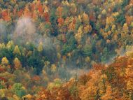 Colorful Autumn Forest, Tennessee