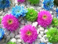 Colourful Flowers in Stones