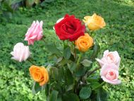 Colourful Rose Bouquet