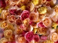 Desktop Wallpapers Flowers Backgrounds Colourful Roses
