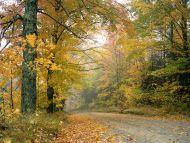 Crisp Autumn Afternoon, Vermont
