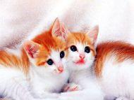 Desktop wallpapers animals backgrounds cute kitty cat - Cute kitten backgrounds for desktop ...