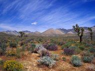 горы песок растительность небо  № 3771051 без смс