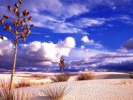 Desktop Wallpapers � Natural Backgrounds � Desert Design � www