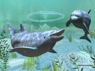 Digital Dolphin