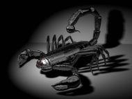 Digital Scorpio