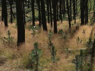 Drying Grass in a Forest
