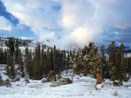 Early Snow Tree Huddle, Sierra Nevada, California