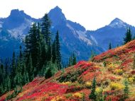 Fall Spectrum in the Tatoosh Range, Washington