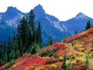 Fall Spectrum in the Tatoosh Range, Washington