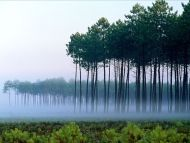 Foggy in Forest