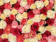 Fragrent Roses