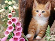 Ginger Cat and Foxgloves