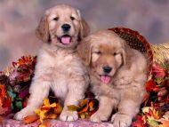 Golden Thanksgiving