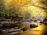 Golden Waters, Great Smoky Mountains National Park