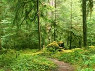 Gray Wolf River Trail, Olympic National Park, Washington