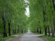 Desktop Wallpapers » Natural Backgrounds » Green Trees ...