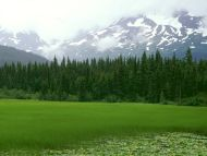 Greener Pastures, Moose Pass, Alaska
