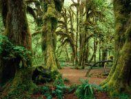 Hall of Mosses, Olympic National Park, Washington
