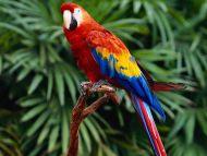 Hello Parrot