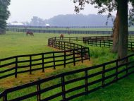 Horse Farm, Goshen, Kentucky