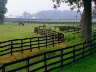 Horse Farm, Goshen, Kentucky