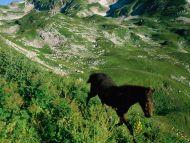 Horse in Hills