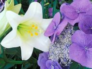 Hydrangea and Easter Lily