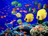 Life Below the Red Sea, Egypt