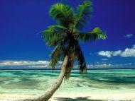 Lone Palm, Seychelles